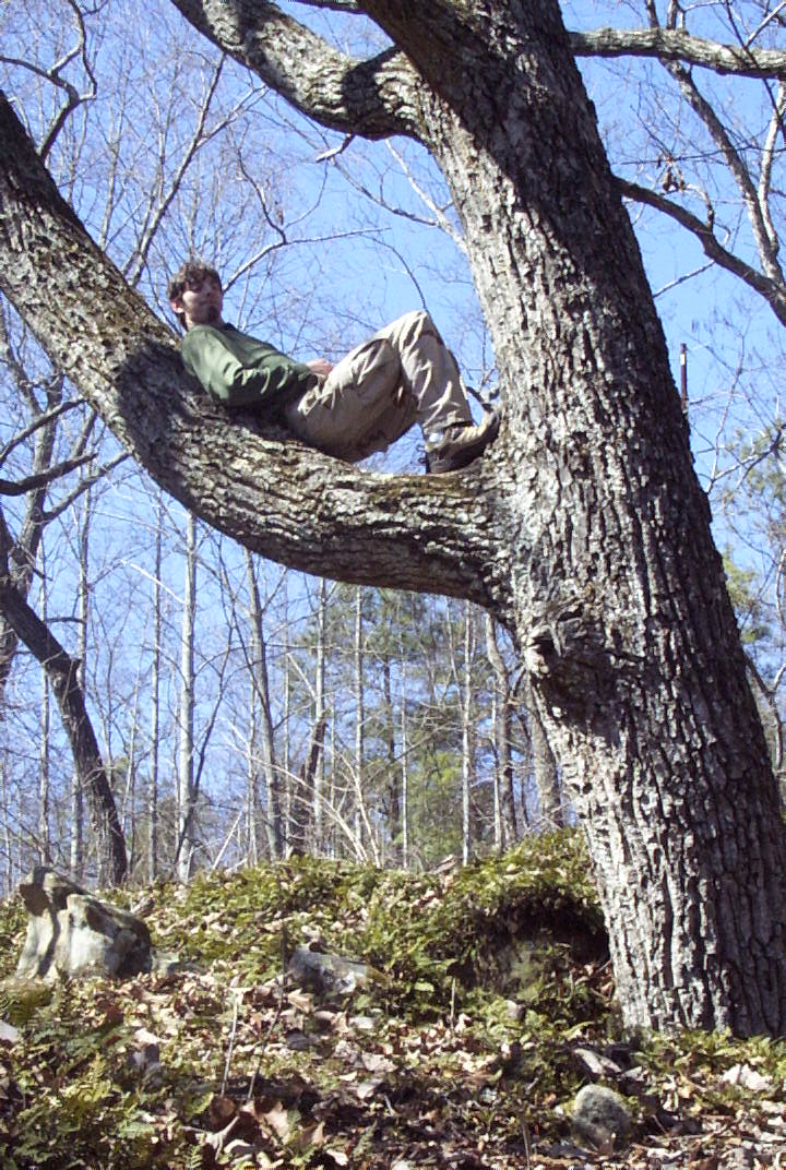Person in Tree.jpg