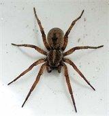 Creepy Crawly Spiders of Alabama